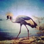 Sephi Bergerson - 1er Lugar, Animales