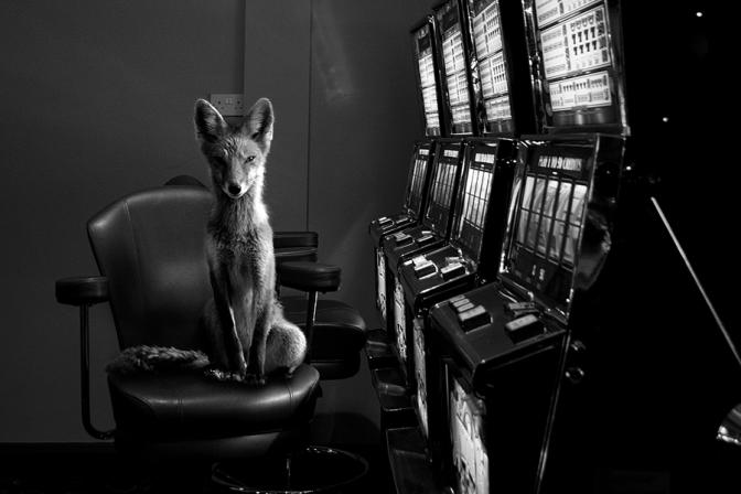 Fine Art Photography  y sus increíbles fotografías ganadoras 2015